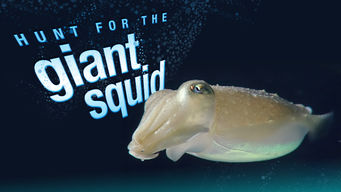 Hunt for the Giant Squid