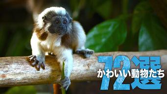 かわいい動物たち 72選