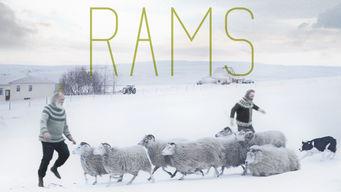 Rams on Netflix USA