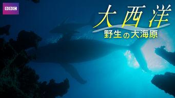 大西洋 -野生の大海原-