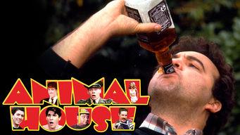 National Lampoon's Animal House on Netflix USA