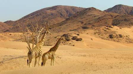 Watch Kalahari. Episode 1 of Season 1.