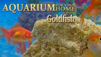 Aquarium for Your Home: Goldfish