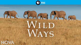 Wild Ways