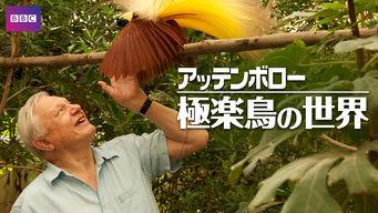 アッテンボロー 極楽鳥の世界
