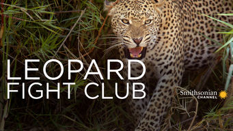 Leopard Fight Club