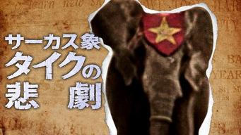 サーカス象タイクの悲劇