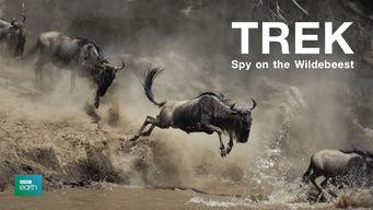 Trek: Spy on the Wildebeest