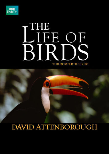 The Life of Birds on Netflix UK