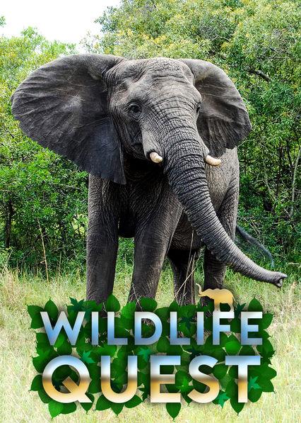 Wildlife Quest