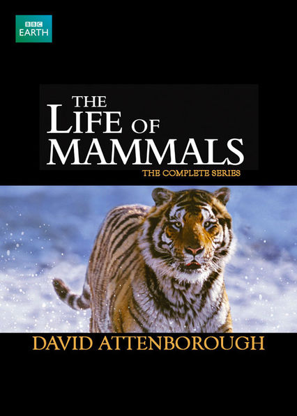 The Life of Mammals on Netflix UK